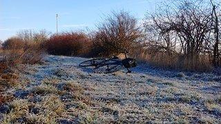 frozen_fields.